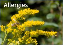 icon-allergy